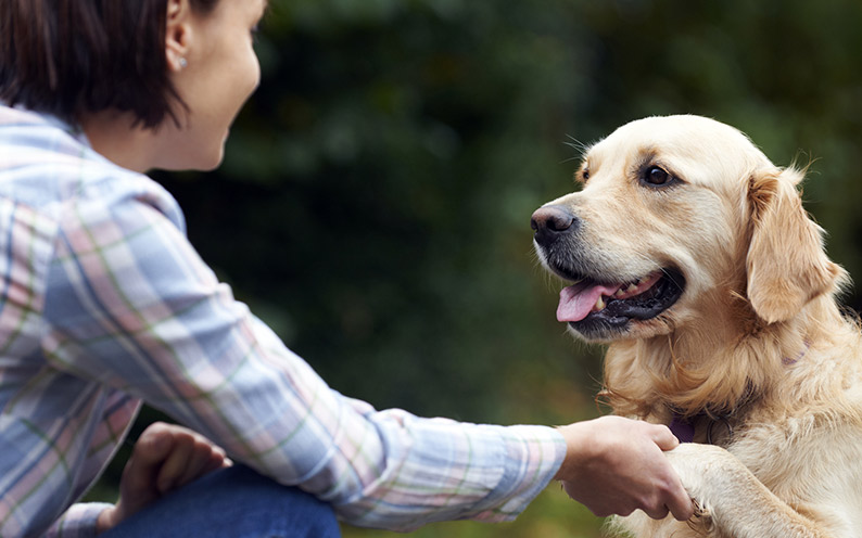LETTER: Blessed are the pet volunteers