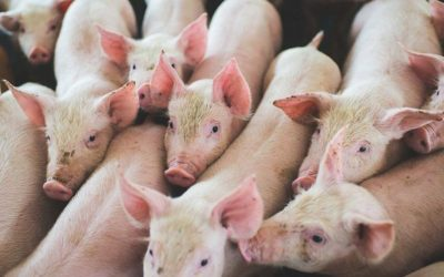 Proposed laws against farm activists smell fishy says John Kleinig