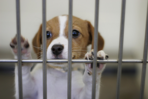 Abandoned pets look for homes as shelters overflow